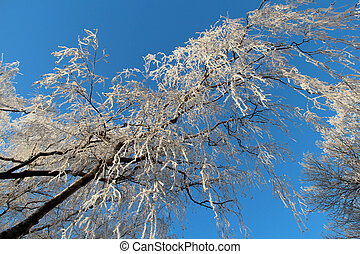 azul, inverno, sky., árvores, contra, gelado