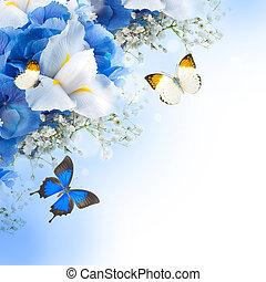 azul, irises, hydrangeas, flores blancas, mariposa