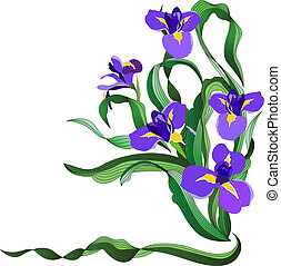 azul, irises, ramo