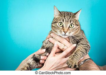 azul, isolado, par, jovem, gato, mãos