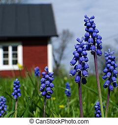 azul, jardín, flores