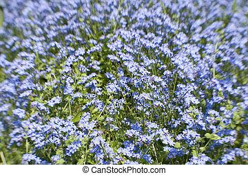 azul, lensbaby, brillante, flores, tiro