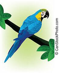 azul, macaw