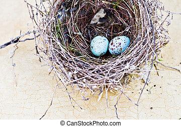 azul, manchado, huevos, desportillar gorrión