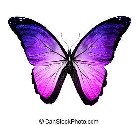 azul, mariposa, aislado, violeta, blanco