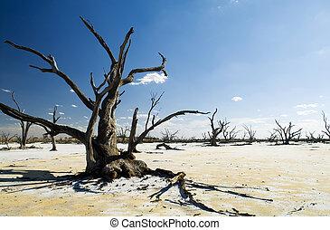 azul, miembros, troncos, cielo, árbol, lago, muerto, debajo, blanco, sal