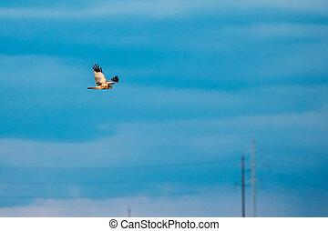 azul, moscas, a veces, belarus., circo, cielo, pájaro,...