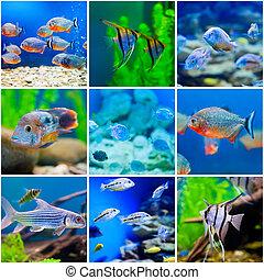 azul, mundo, agua salada, acuario