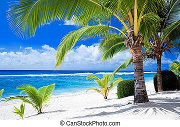 azul, negligenciar, árvores, espantoso, palma, lagoa