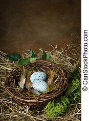azul, ninho pássaro, ovos