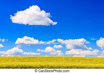 azul, nuvens, céu, campo amarelo, flores brancas