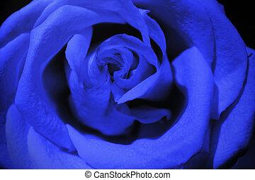 azul oscuro, rosa