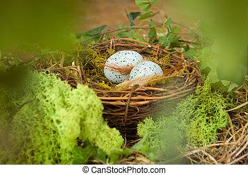 azul, ovos, ninho
