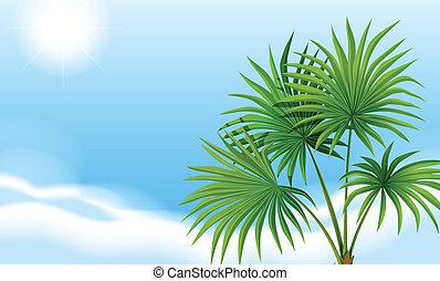 azul, palma, planta, céu, claro