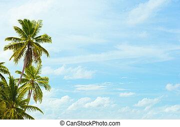 azul, palmas coco, espaço, texto, céu, fundo, em branco