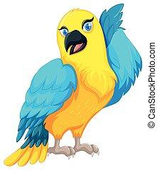 azul, pena, amarela, papagaio, pássaro