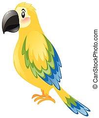 azul, pena, amarela, papagaio