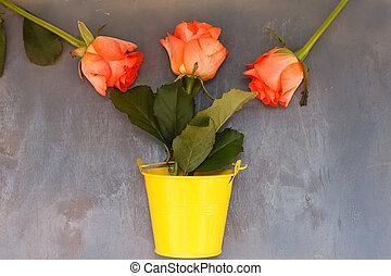azul, pequeno, balde, madeira, três, rosas amarelas, fundo, vermelho