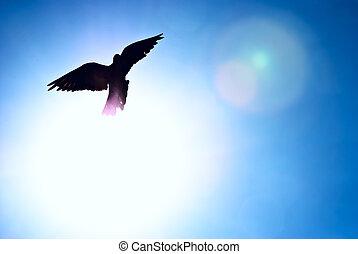 azul, pombo, céu, contra, brilhar sol