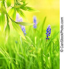 azul, prado, bonito, flores