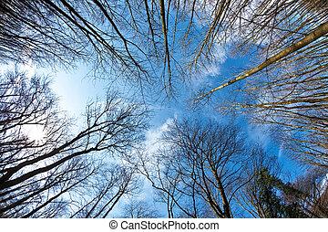 azul, primavera, árvore, coroas, profundo, céu
