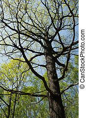 azul, primavera, céu, árvores, cedo, fundo