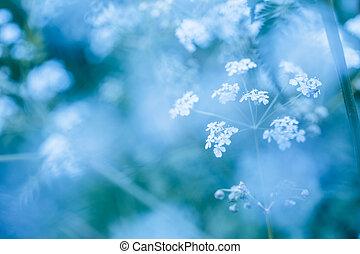 azul, primavera, wildflowers, suave, plano de fondo