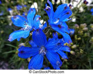 azul, quadro, planta, sino flor