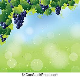 azul, ramo, uvas verdes, vino