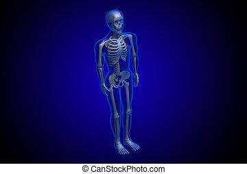 azul, representado, esqueleto, fundo, 3d