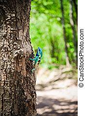 azul, reptil, jardín, -, árbol, fauna, asia, (oriental,...