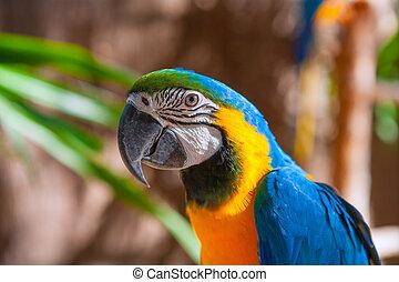 azul, retrato, amarela, pescoço, papagaio