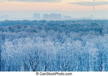 azul, salida del sol, en, muy, frío, invierno, mañana temprana