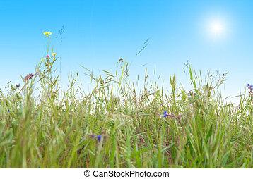azul, soleado, pasto o césped, cielo, verde