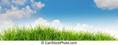 azul, .summer, natureza, primavera, céu, costas, fundo, tempo, capim