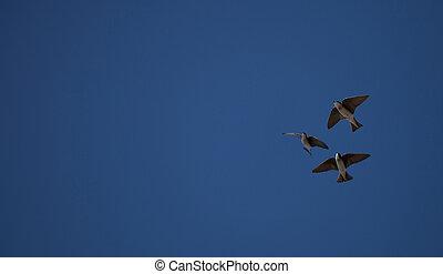 azul, tachycineta, golondrina, árbol, pájaro
