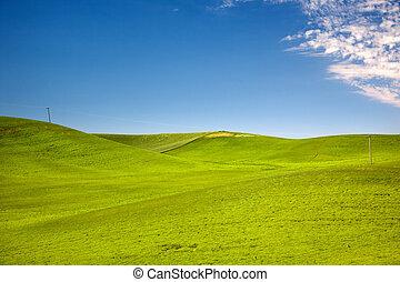 azul, trigo, linhas, céus, washington, telefone, pacífico, ...