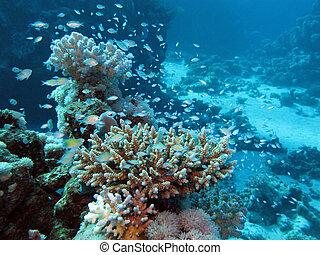 azul, tropical, grande, mar, coral, agua, profundidad, ...