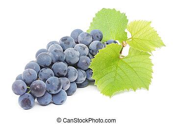 azul, uva, con, hojas verdes