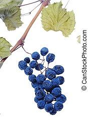 azul, uva, grupo, como, pasa