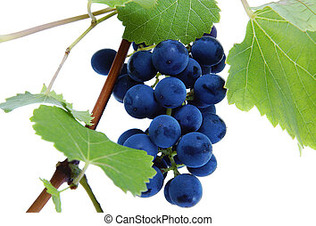 azul, uva, grupo, con, hojas