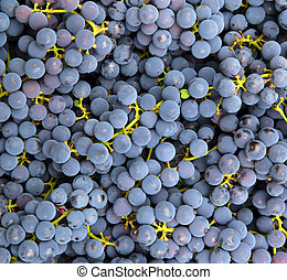azul, uvas, plano de fondo