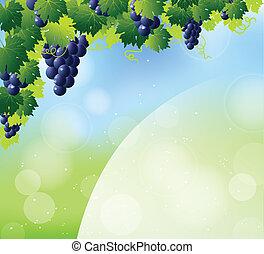 azul, uvas vinho, grupo, verde
