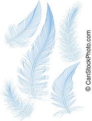 azul, vector, plumas
