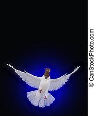 azul, vuelo, aislado, libre, paloma blanca