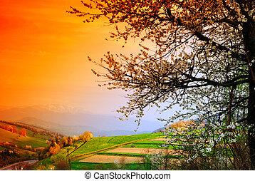 azzurramento, albero ciliegia
