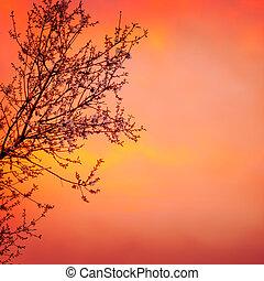 azzurramento, albero, su, tramonto, fondo
