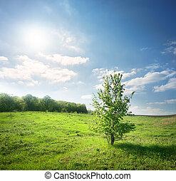 azzurramento, albero verde