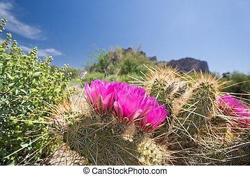 azzurramento, cactus, fiori