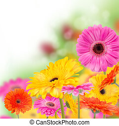 azzurramento, fiori